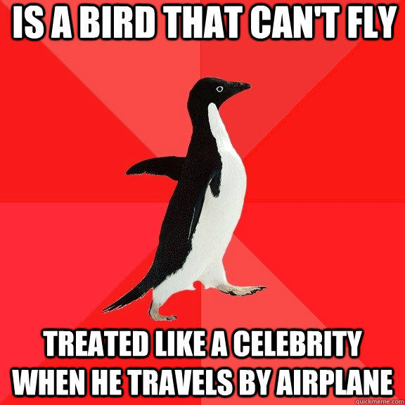 Is a bird that can't fly treated like a celebrity when he travels by airplane - Is a bird that can't fly treated like a celebrity when he travels by airplane  Socially Awesome Penguin