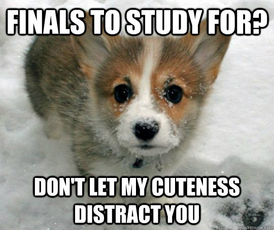 20d7d34105eda2376e5043a5d5db6d0a37719a028b1047224c5ca560ca516761 finals to study for? don't let my cuteness distract you