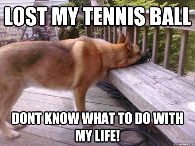 Lost my Tennis ball DONT KNOW WHAT TO DO WITH MY LIFE! - Lost my Tennis ball DONT KNOW WHAT TO DO WITH MY LIFE!  First World Dog problems