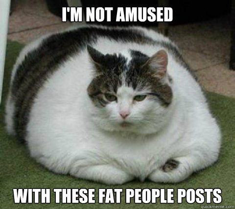 i'm not amused with these fat people posts - i'm not amused with these fat people posts  Chubby Cat