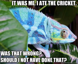 It was me. I ate the cricket. Was that wrong? Should I not have done that?