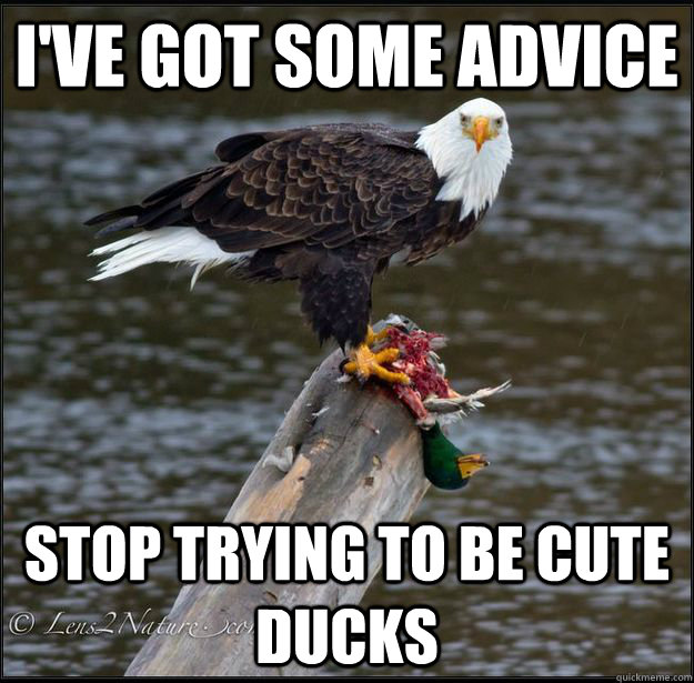 i've got some advice stop trying to be cute ducks - i've got some advice stop trying to be cute ducks  Misc