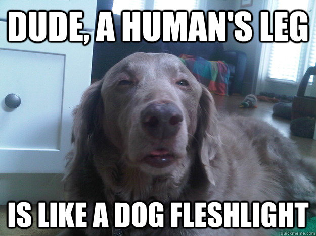 Dude, a human's leg is like a dog fleshlight - Dude, a human's leg is like a dog fleshlight  10 Dog