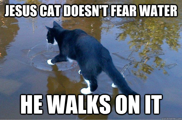 JESUS CAT DOESN'T FEAR WATER HE WALKS ON IT