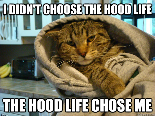 i didn't choose the hood life the hood life chose me  Hood Cat
