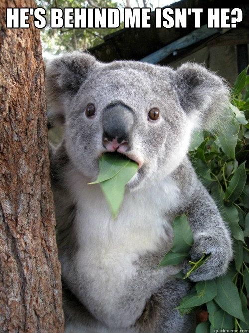 He's behind me isn't he?   Surprised Koala