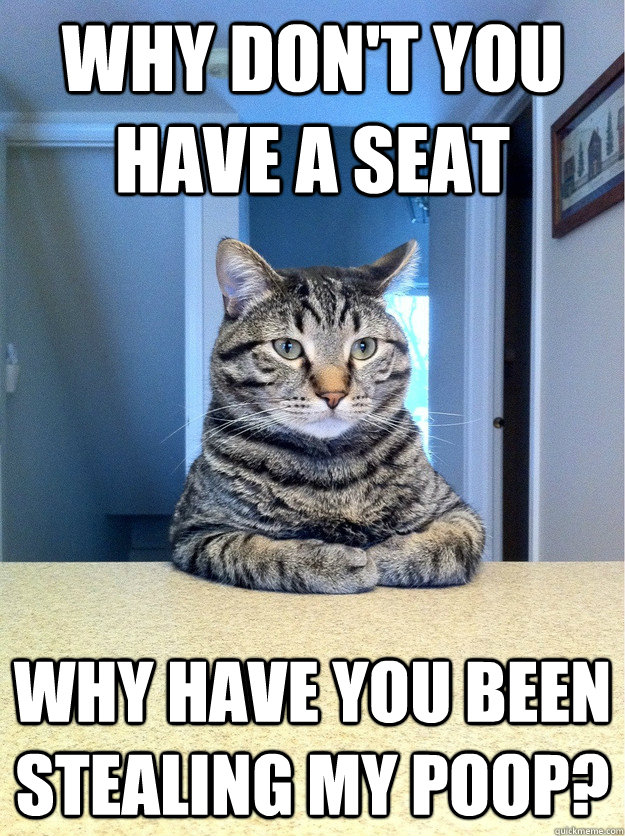 Why don't you have a seat Why have you been stealing my poop?  Chris Hansen Cat