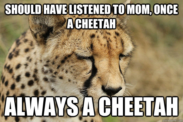 Sad Cheetah Memes Quickmeme