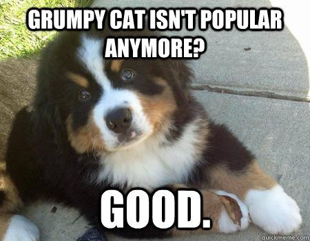 grumpy cat isn't popular anymore? Good.  Grumpy Dog