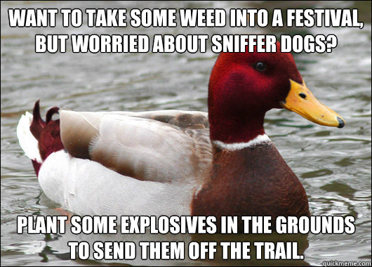 Want to take some weed into a festival, but worried about sniffer dogs? plant some explosives in the grounds to send them off the trail. - Want to take some weed into a festival, but worried about sniffer dogs? plant some explosives in the grounds to send them off the trail.  Malicious Advice Mallard