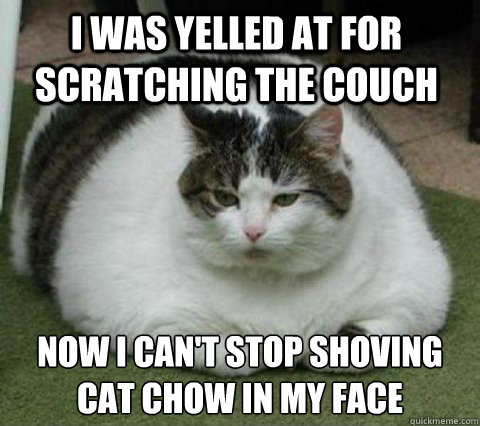 I was yelled at for scratching the couch Now I can't stop shoving cat chow in my face