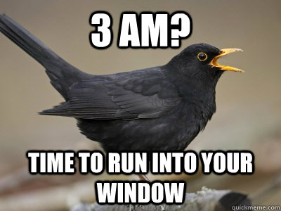 3 AM? Time to run into your window