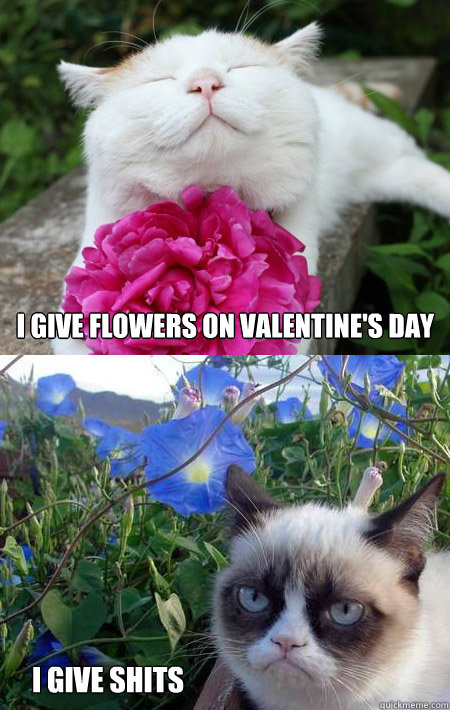 233f45cdb6e4da00320fe0c99e906eb9167a791d689ab54de1605ab6d351a0cc i give flowers on valentine's day i give shits grumpy cat w,