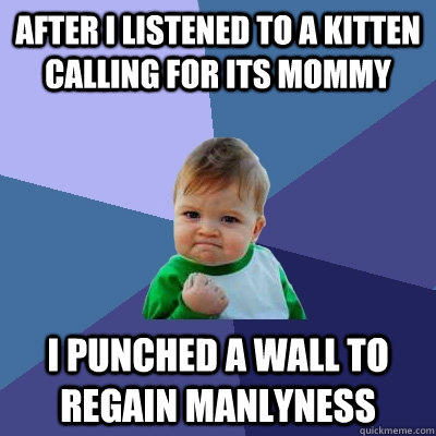 After i listened to a kitten calling for its mommy I punched a wall to regain manlyness  Success Kid