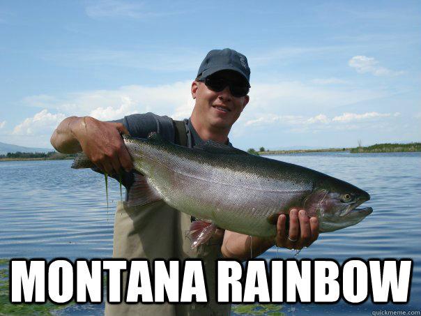 Montana rainbow -  Montana rainbow  Not a bad Trout