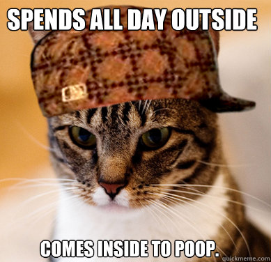 Spends all day outside Comes inside to poop. - Spends all day outside Comes inside to poop.  Scumbag Cat