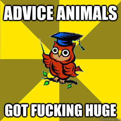 Advice Animals Got Fucking Huge - Advice Animals Got Fucking Huge  Observational Owl