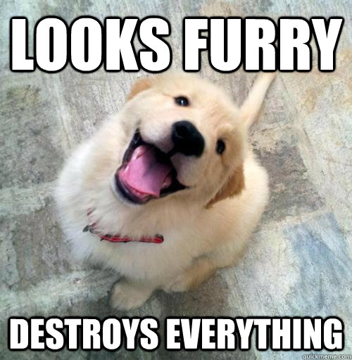 Looks Furry Destroys Everything  Actual Puppy
