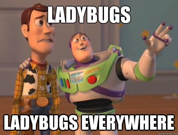 ladybugs ladybugs everywhere - ladybugs ladybugs everywhere  Buzz Lightyear
