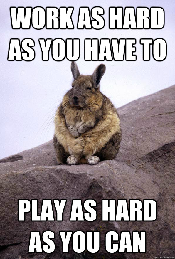 Work as hard as you have to Play as hard as you can - Work as hard as you have to Play as hard as you can  Wise Wondering Viscacha