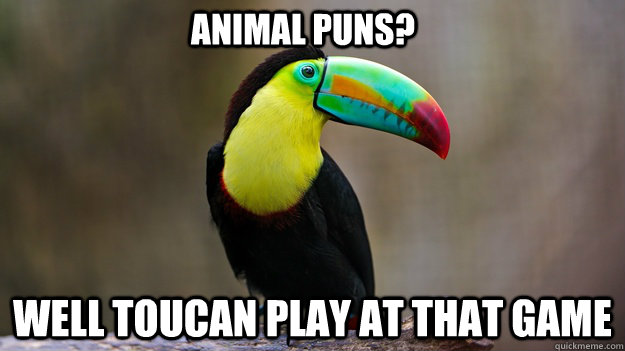 Animal puns?  Well toucan play at that game - Animal puns?  Well toucan play at that game  Sassy Toucan