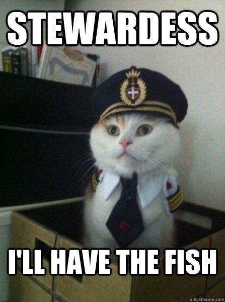 STEWARDESS I'll have the fish