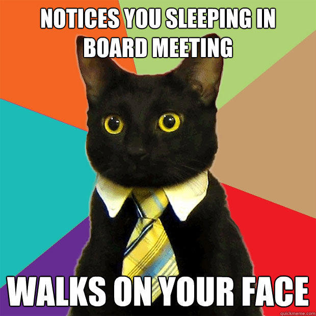 Notices you sleeping in board meeting walks on your face - Notices you sleeping in board meeting walks on your face  Business Cat