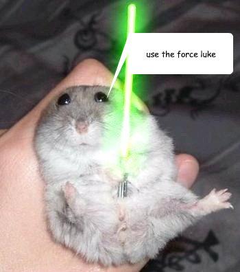 funny animal memes for kids