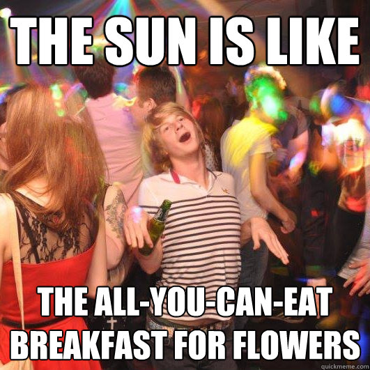 The sun is like the all-you-can-eat breakfast for flowers - The sun is like the all-you-can-eat breakfast for flowers  Happy Realization Guy