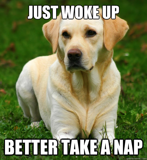 Just woke up Better take a nap  Dog Logic