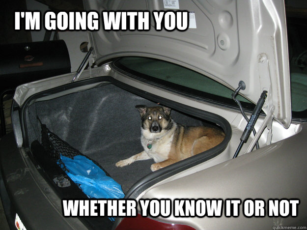 I'm going with you Whether you know it or not - I'm going with you Whether you know it or not  Stow Away Dog