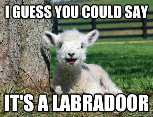 I guess you could say It's a labradoor - I guess you could say It's a labradoor  LOLlamb