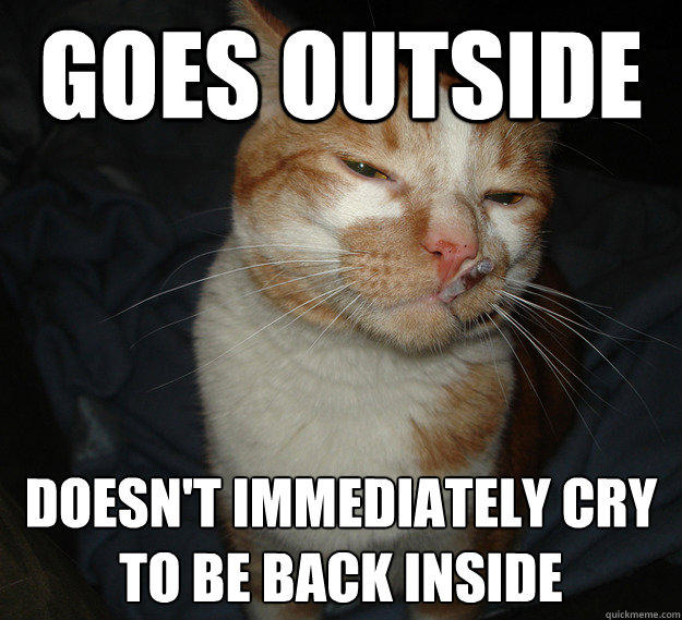 Goes outside Doesn't immediately cry to be back inside - Goes outside Doesn't immediately cry to be back inside  Cool Cat Craig