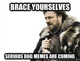 BRACE YOURSELVES serious dog memes are coming