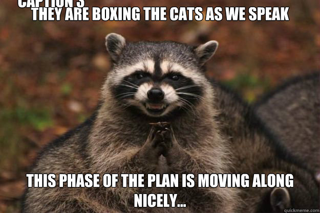 They are boxing the cats as we speak This phase of the plan is moving along nicely... Caption 3 goes here