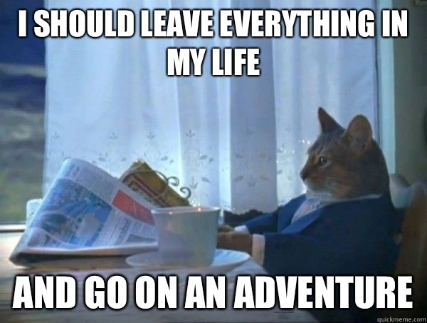I should leave everything in my life and go on an adventure  morning realization newspaper cat meme