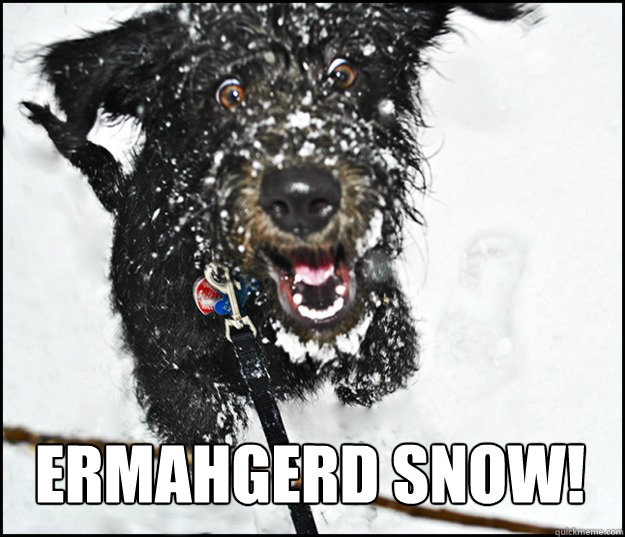 ERMAHGERD SNOW! - ERMAHGERD SNOW!  Overly Excited Dog
