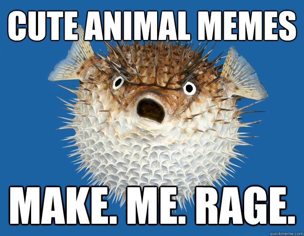Cute animal memes Make. Me. Rage. - Cute animal memes Make. Me. Rage.  Pessimistic Porcupinefish