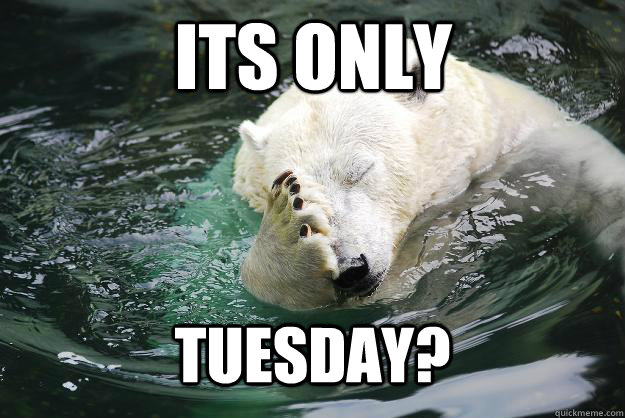 Its only tuesday? - Its only tuesday?  Embarrassed Polar Bear