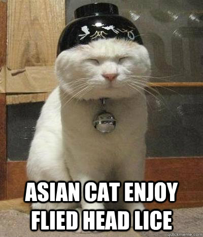asian cat enjoy flied head lice -  asian cat enjoy flied head lice  Rice Bowl Cat