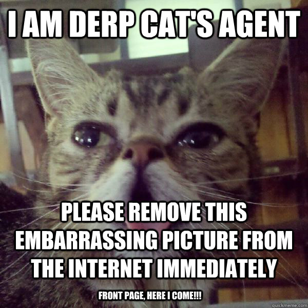 I am Derp Cat's agent Please remove this embarrassing picture from the internet immediately front page, here I come!!! - I am Derp Cat's agent Please remove this embarrassing picture from the internet immediately front page, here I come!!!  DerpCat