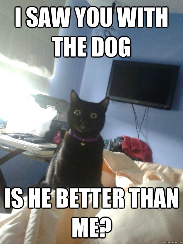 i saw you with the dog is he better than me? - i saw you with the dog is he better than me?  overly attached cat