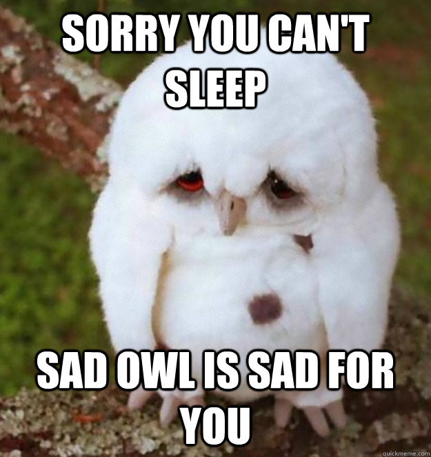 Sorry you can't sleep Sad Owl Is Sad For You - Sorry you can't sleep Sad Owl Is Sad For You  No Sleep Heres Sad Owl