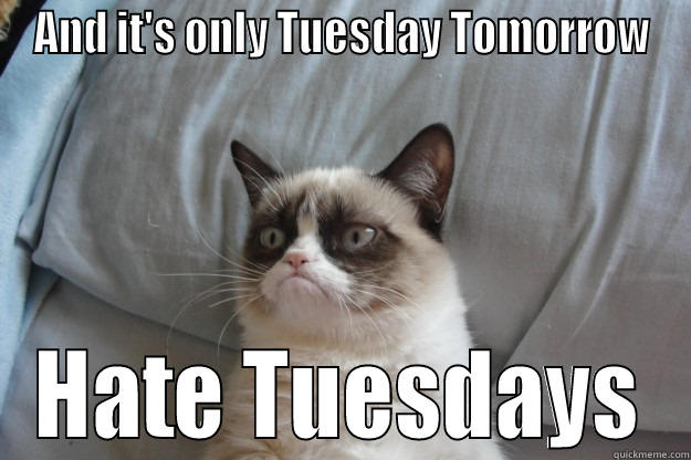 Funny Memes For Tuesday : Grumpy cat memes quickmeme