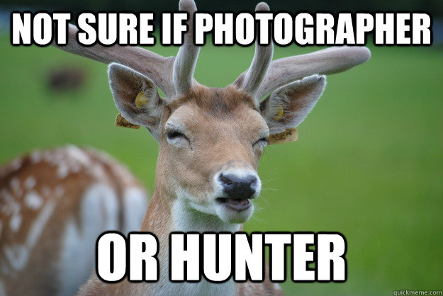 Not Sure if Photographer Or Hunter - Not Sure if Photographer Or Hunter  Deer Fry