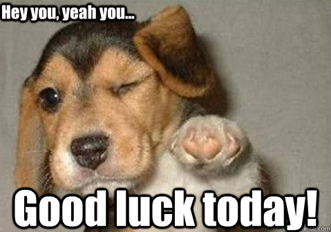 Good luck today! Hey you, yeah you... - Good luck today! Hey you, yeah you...  winking pointing puppy