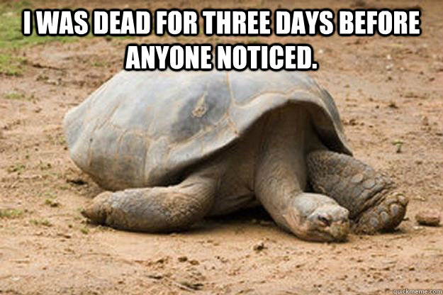 I was dead for three days before anyone noticed.  - I was dead for three days before anyone noticed.   Depression Turtle