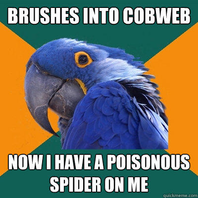 brushes into cobweb now i have a poisonous spider on me - brushes into cobweb now i have a poisonous spider on me  Paranoid Parrot