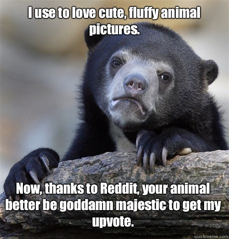 I use to love cute, fluffy animal pictures. Now, thanks to Reddit, your animal better be goddamn majestic to get my upvote. - I use to love cute, fluffy animal pictures. Now, thanks to Reddit, your animal better be goddamn majestic to get my upvote.  Confession Bear