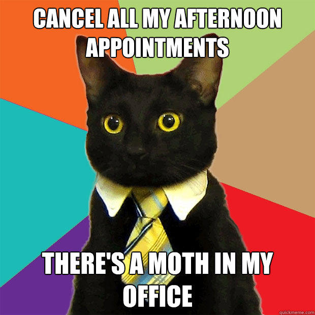 Cancel all my afternoon appointments There's a moth in my office - Cancel all my afternoon appointments There's a moth in my office  Business Cat